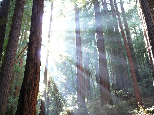 Tree Sunshine - JPEG